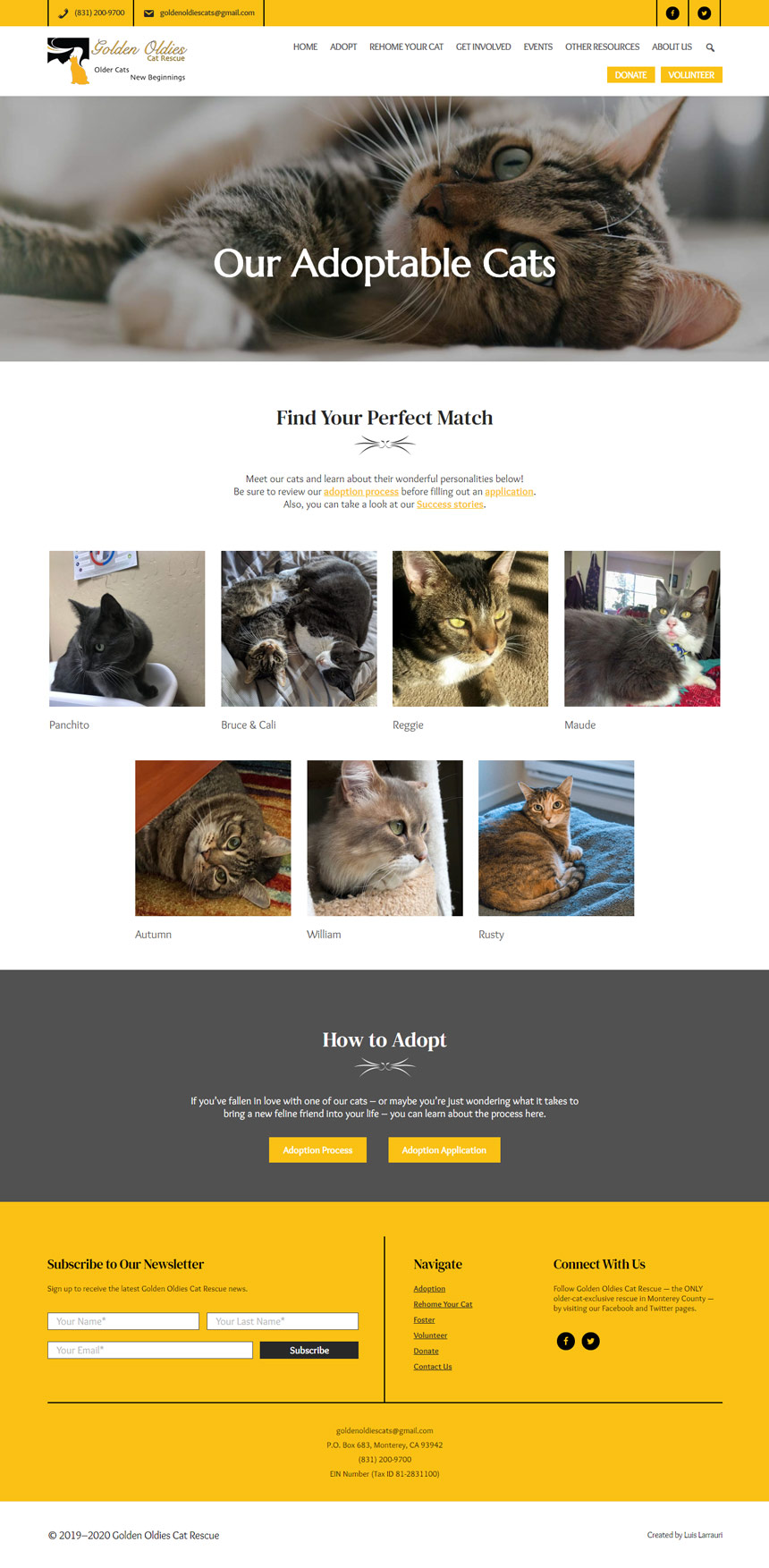Golden Oldies Cat Rescue Adoptables Page